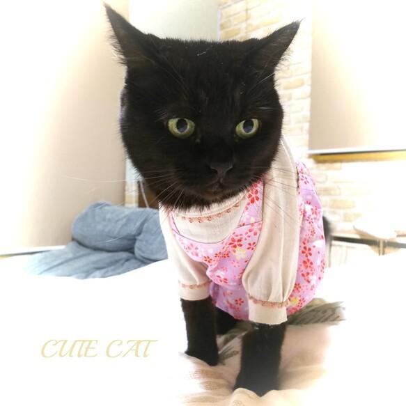 猫服🌸【限定完成品】サクラ春ワンピ ペットウエア 猫皮膚防護服 ペット服・アクセサリー CUTE CAT_5