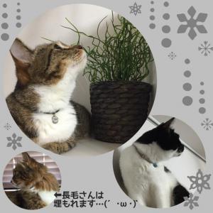 《猫・小型犬用》軽くて楽々♪アンティーク風ラメゴム首輪(ネイビー) リード・首輪 naoe_6