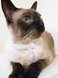猫さん用のおしゃれネックレス、アクアマリン(送料込)_1