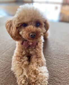 首輪超小型犬・小型犬用 (送料無料) リード・首輪 MIIIHO_3